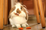 Cheney-Bunny.jpg