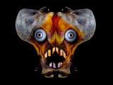 Bone-face.jpg
