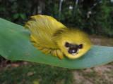 Slothpillar.jpg