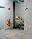 Shark-surprise-O.jpg