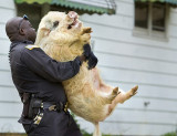 Cop-and-pig-O.jpg