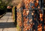 Leaf Lined