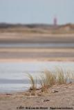 Beach Grass underneath the Lighthouse