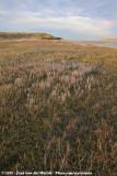 The tidal plains in the Slufter
