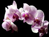 orchid from carol christmas 2012.jpg
