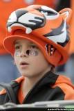 Cincinnati Bengals fan