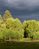 Approaching storm and aspens  11-1-2012 e-8020.jpg
