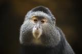 December 2012 - Favorite for 2012 - Primate Portrait - Dennis Hedberg