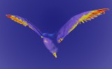 psychedelic seagull...