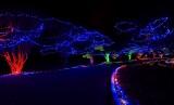 holiday lights at norfolk botanical garden...