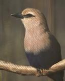 zoo bird...