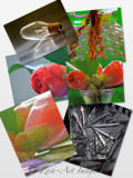 Flower&Glass Collage
