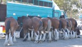 The team lined up and ready for work, with a lot of horsepower
