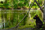 rio pup on the Ipswich River