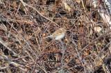 _-201.jpgfield sparrow main st wilmington