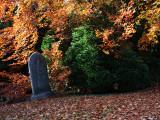 Autumn Leaves, West Cemetery, Darlington