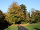 Autumn Leaves, South Park, Darlington