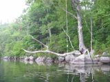 The Rope Swing at Manning #2