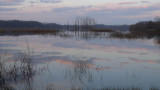 landscape TN