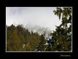 IMG_3161 paysage nature alpha.jpg