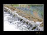 _MG_1517 eau.jpg