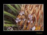 _MG_3212 nature plante.jpg