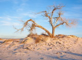 White Sands in Color