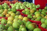 Pears And More Pears And More Pears And More....