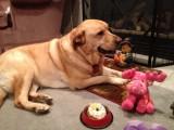 Glinda's Birthday - 2012-10-17