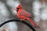 CardinalDecember 7, 2012