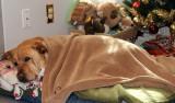 Glinda Resting AgainDecember 19, 2012