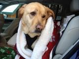 Our Dog GlindaDecember 24, 2012