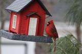 CardinalFebruary 21, 2013