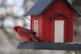 CardinalFebruary 28, 2013