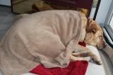 Glinda SleepingMarch 12, 2013