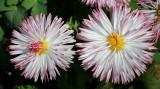 Macro of FlowersApril 30, 2013