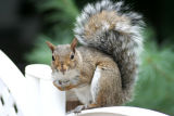 August 25, 2006Squirrel