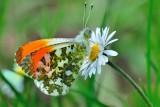 Butterflies 2012