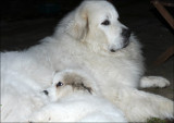 Pile of Fluff