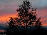 autumn evening..