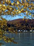 Herbst am Rhein..