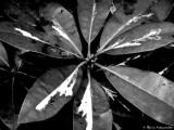 A plant...