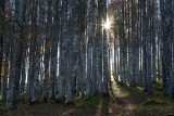 Foresta del Cansiglio