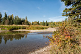 Mid September On The Little Red Deer River