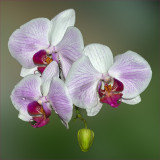 Orchids On Green