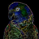 Neon Parrot