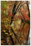 Autumn Along Pine Run