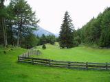 Lush meadows