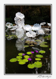 IMG_6322-Persian Pond.jpg