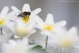 Hoverfly spec.